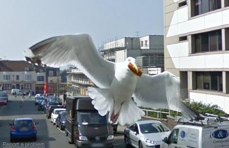 Streetview Vogel